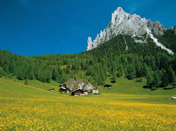 Trentino-green