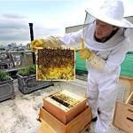 Il miele sul tetto