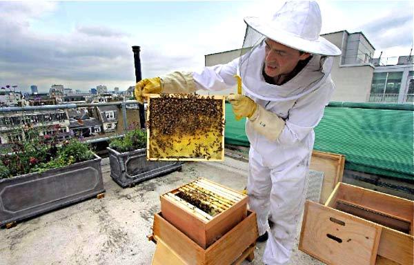 api-sul-tetto-miele