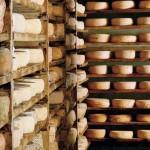 Slow Food all'Expo, con degustazioni formaggi latte crudo
