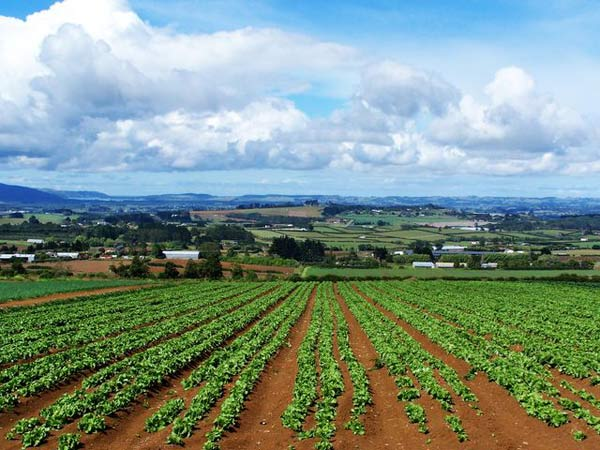 terra-agricoltura