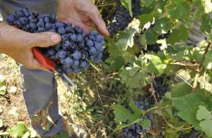 Fivi, il vino è un prodotto agricolo