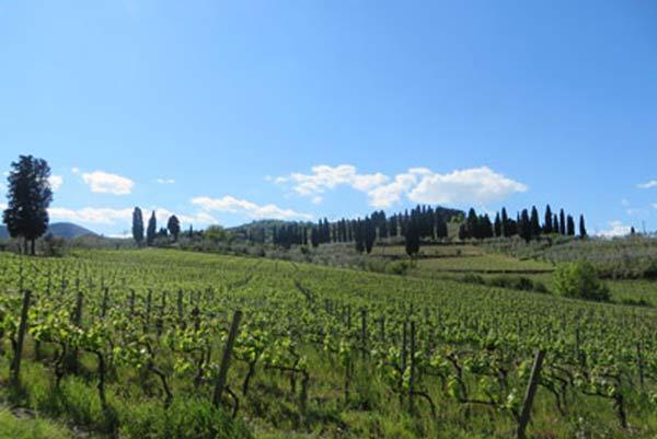 Carmignano-TenutaPratesi3-17042014)