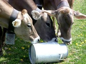 Quote latte, il progetto, le multe i produttori