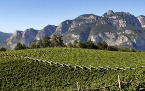 Il Consorzio Vignaioli del Trentino