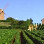 La Champagne patrimonio dell'Unesco