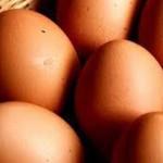 Salmonella, ritirate 300 milioni di uova