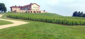 In venti gocce di vino 100 milioni di cellule