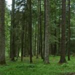 Sviluppo rurale, valorizzazione degli ecosistemi