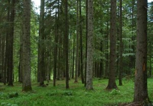 bosco-trentino