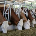 Restituzione quote latte