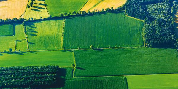Coltivazioni osservate dal satellite