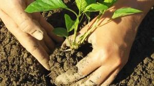 Custodire la fertilità del suolo