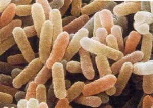 Vittime di infezioni e intossicazioni