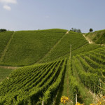 Ceretto, wine, bio, arte  e cucina di successo