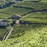 Turismo e Agricoltura un progetto condiviso