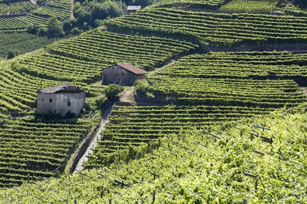 Trentino_vigneti_terrazzati-cembra