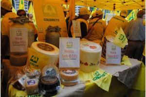 Pecorino formaggio da export