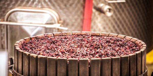 Mediterranean Wines, il progetto dell'Enoteca