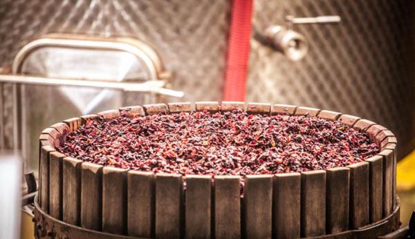 Mediterranean-Wines-Pederzana-Castelveltro-Modena