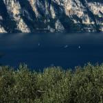 Potatura dell'olivo sul Lago di Garda