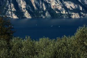 Potatura-olivi-corso-Garda
