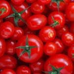 Pomodori, Coldiretti lancia l'allarme