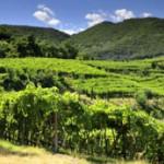 Colli Berici a Vinitaly, degustazioni e territorio