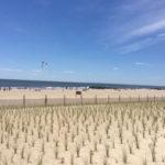 Beach, estate a New York