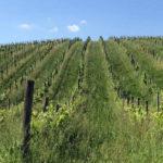 Promozione internazionale vino