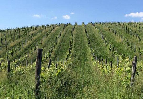 Promozione vino-vigna