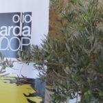 Oro del Garda, Olio del Garda DOP 2016
