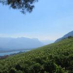 Vigna Castel Ringberg per grandi vini