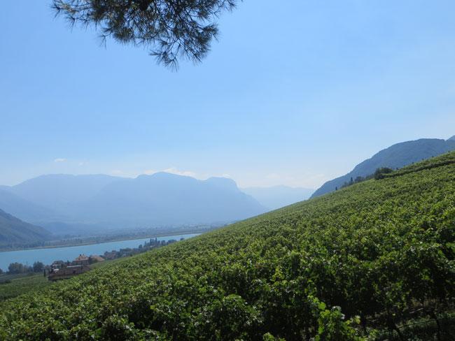 Vigna-ElenaWalch-Castelringberg-vigneti-lago-byLuongo-26082016