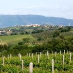 Montefalco, boom turistico per vino e olio