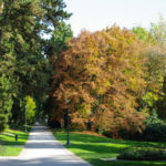 Boschi incantati, parco di Levico Terme