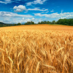 Comparto cerealicolo, accordo ripartizione fondo