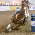 Cowboy, rivive il west a Fieracavalli