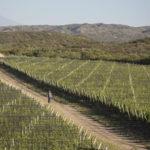 Tupungato, realtà della Masi Wine Experience