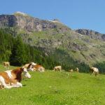 Brimi, contadini di montagna