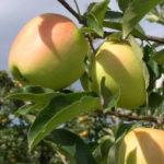 Frutticoltori, primo bilancio di sostenibilità