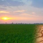 Danni climatici all'agricoltura