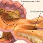 Mesentere, un nuovo organo del corpo