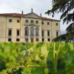 Vinnatur, viticoltori  naturali a Villa Favorita