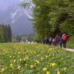 Erbe e fiori di montagna dal Rolle al Vanoi