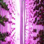 Piantine sbucano dalle pareti, start up Square Roots