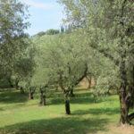 Rossato vince il Premio miglior Potatore al festival del GardaDop