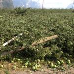 Agricoltura per i contadini caro polizze