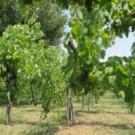 Feudi di San Gregorio, passione per l'eccellenza vinicola
