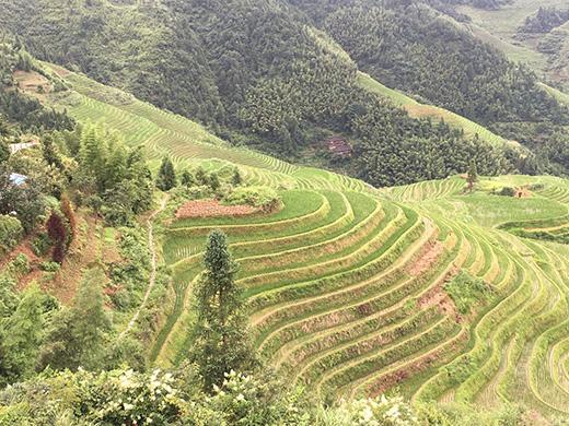 Cina tutela agricoltura e paesaggi rurali